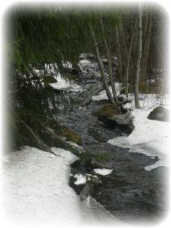 spring creek finland