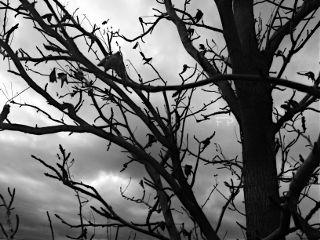 spooky tree blackandwhite hdr fall