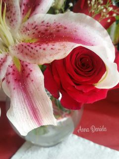 beautifypicsart roses