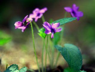 flower closeup photography