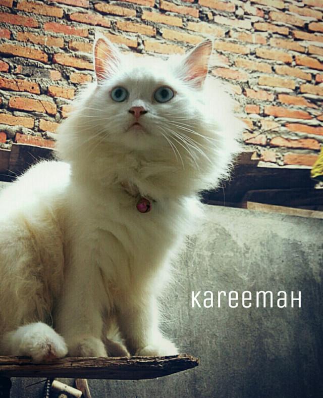She's always got the look How about this expression? anybody like it? #kitten #petsandanimals  @johndub @audiredz