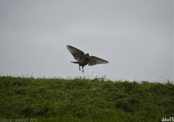 bird action nature
