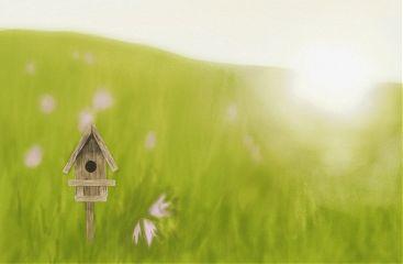 dcbirdhouse drawing birdhouse nature