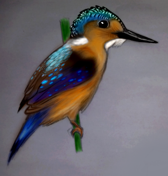 #bird #cute #colorful #wdpzooanimals 😄A kingfisher drawing!!!😄 THANK YOU! :)
