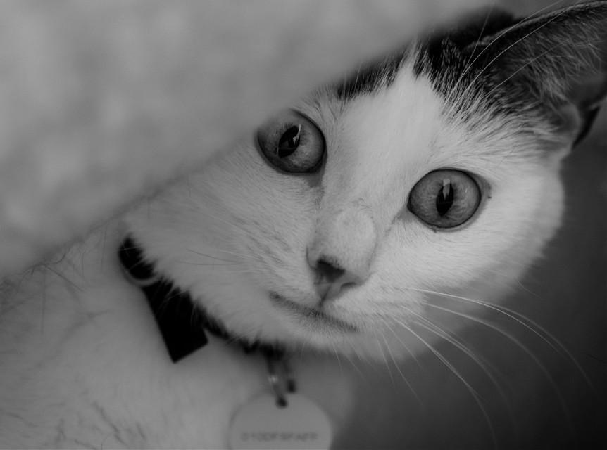 #cat #cateyes #petsandanimals #photography #nikon #nikonphotography #nikonphotographer #photographer #bw #bnw #blackandwhite #sweet #sweety #cute #cutie