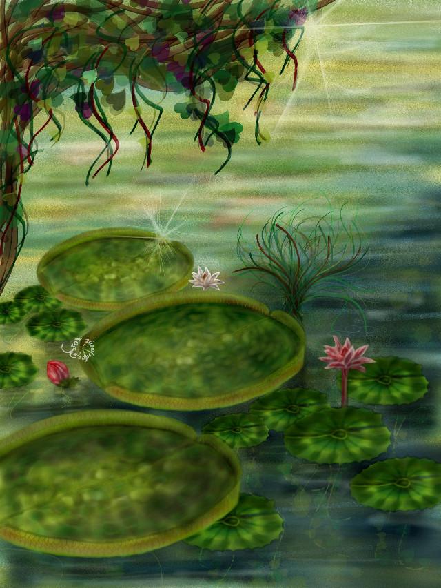 """Vitória-régia or water star (victoria amazonica). Drawn in PA and submitted to the #dcleaf contest. If you like or repost, thanks! Finally I've got to make the video this time, please see http://youtu.be/ZxnYPPSLpwc ☺😊😀! 2-191/884 #drawing #artistic #nature #flower #leaf #colorful  Vitória régia, the world's largest lily, is native of the Amazon river basin and is also known as """"the water star"""". Please read the indian legend that explains why in www.sumauma.net/amazonian/legends/legends-regia.html .  """" Sempre vaguei livremente nas asas da liberdade Hoje ando unicamente buscando a felicidade E a felicidade apenas virá pelo teu sorriso Andarei rumo aos teus olhos pra habitar teu paraíso  (Dois olhos que se tocaram o pulsar de dois corações Dois seres enamorados levitando em emoções Sou flor de vitória régia que enfeita a noite dos rios quero que enfeites a vida de um coração tão vazio)""""         (Wilson Paim, in 'Vitória régia', please see https://m.youtube.com/watch?v=_RmvU0WnjNM)"""