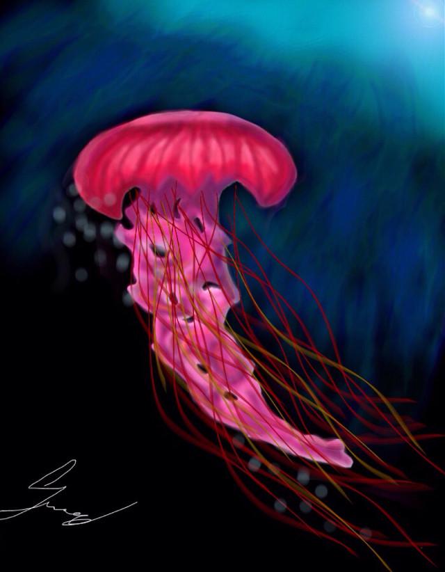 #dcjellyfish #jellyfish #sea #water #animal