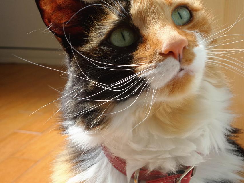 #cat  #pets #petsandanimals #photography  #vintage #freetoedit #animals