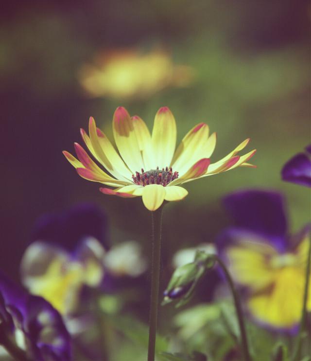 #flower #flowers #nature #summer #photography