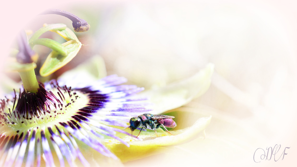 #flower #photography #nature #insects