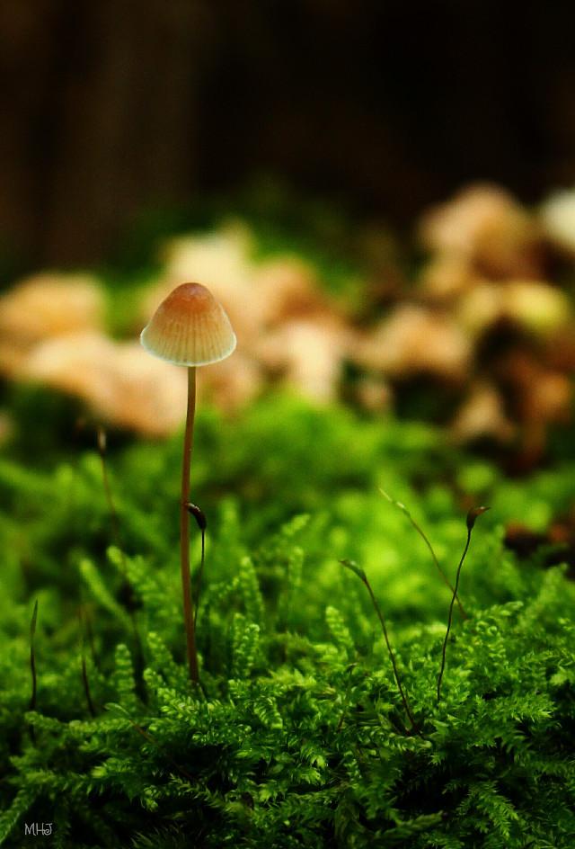 EOS 700D   #photography #nature #macro #autumn #mushroom