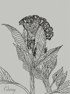 dcsketch photography flower
