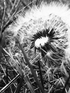 flower nature photography blackandwhite lgg2mini