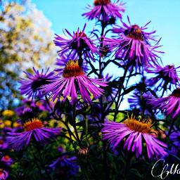 colorful colorsplash flower hdr nature