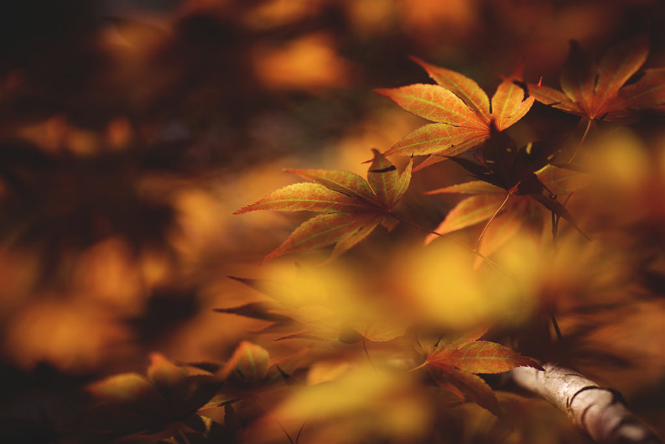 #bokeh #colorful #nature #travel #autumn #photography