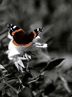 deeliriouss photography emotions nature butterfly