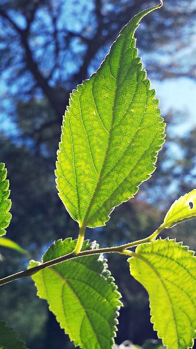Belle journée d'automne pour se promener #nature  #photography #feuille #sun #soleil #automne #fall